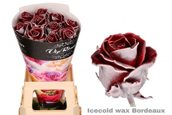 Roos icecold wax bordeaux