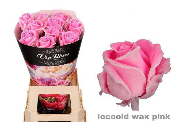 roos icecold pink wax